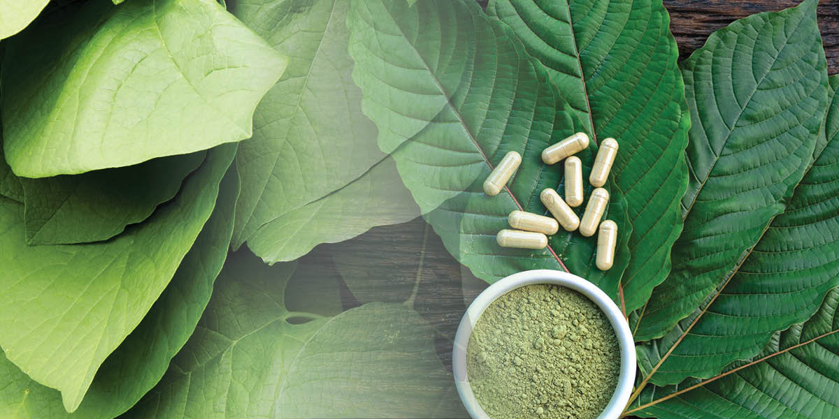 Kratom vs. Kava: What's the Difference?